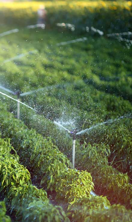 Green Path Landscape Company Irrigation System Repair