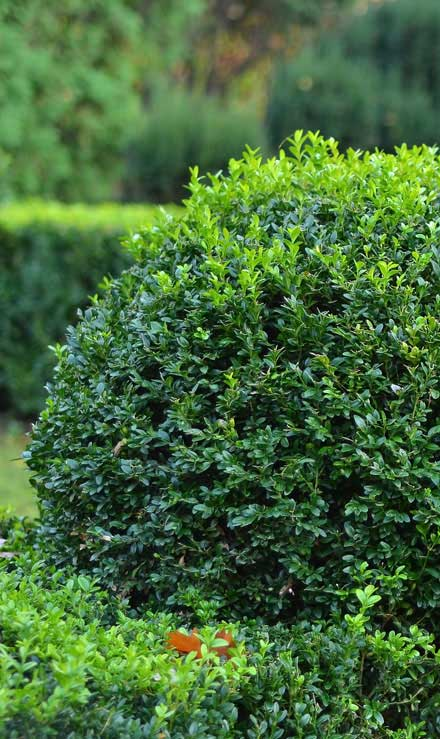 Green Path Landscape Company Shrubs & Hedges