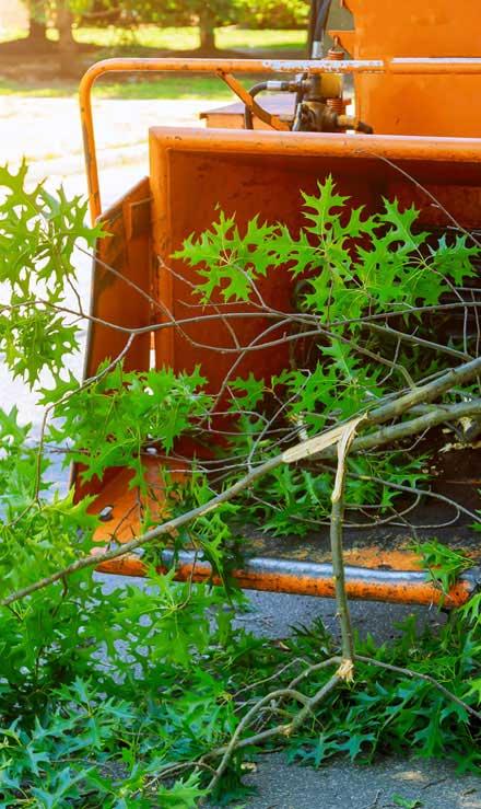 Green Path Landscape Company Tree Trimming