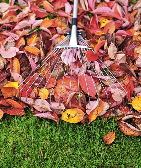 Green Path Landscape Company Fall Clean Up